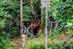 Malaysia: Kuching – Semenggoh Wildlife Center