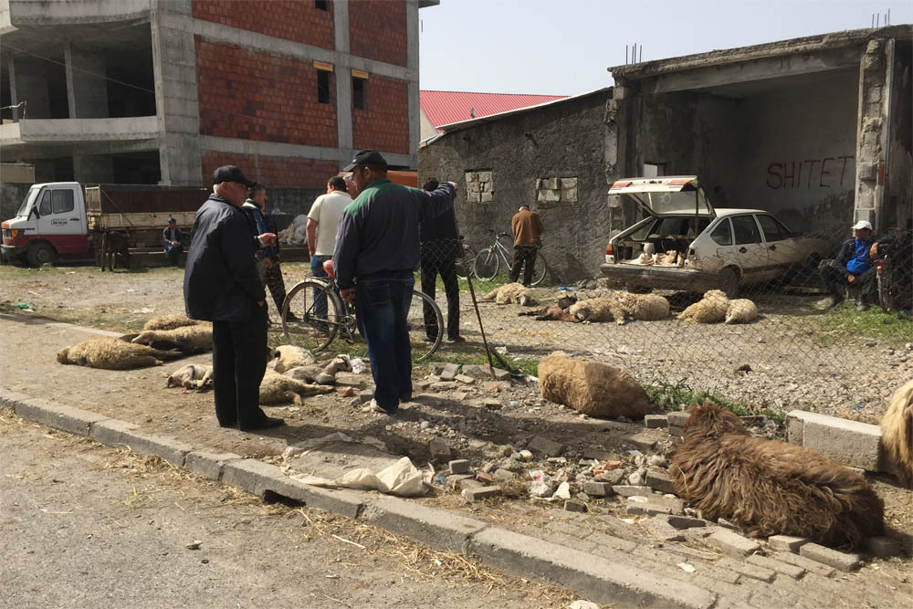 Sheep market in Shkodra