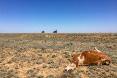 Unforgiving desert...