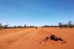Not every creature survives the outback