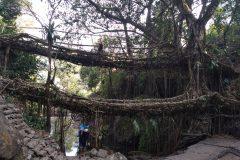 Double root bridge