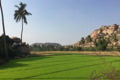 Beautiful rice fields in Hampi