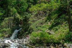 Black Grouse waterfall near Lagodekhi