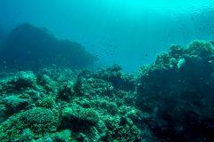 Still a healthy reef