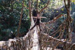 Miri checks a root bridge