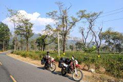 Tea plantations along the road